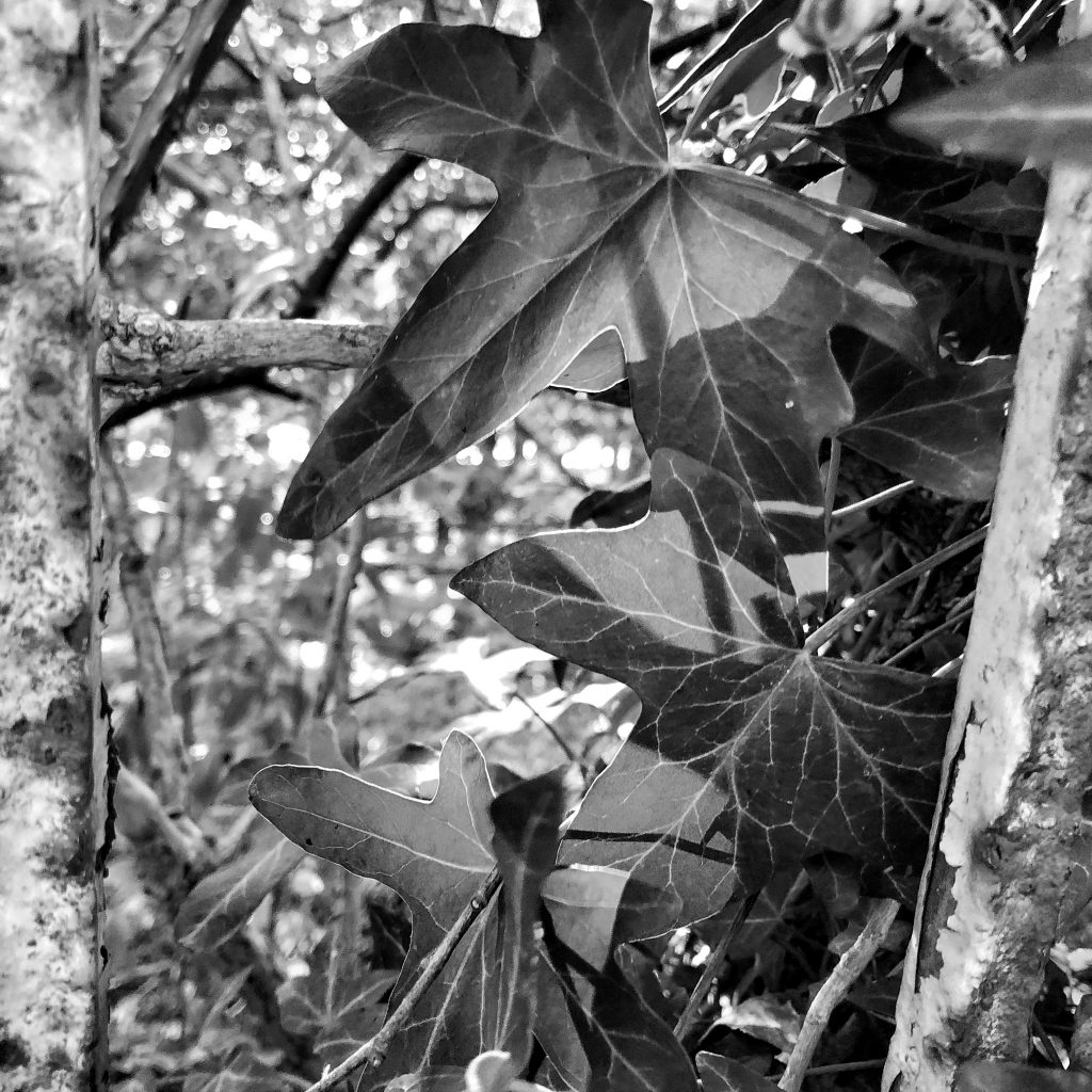 Photograph of leaves